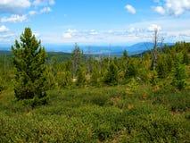Mountain taiga, mountain Altai Royalty Free Stock Photography