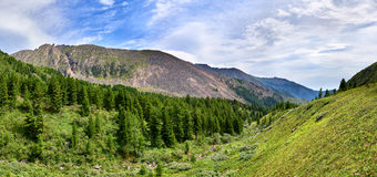 Mountain taiga on one slope of valleys and tundra Royalty Free Stock Photo