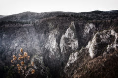 Mountain Tara in Serbia Stock Image