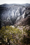 Mountain Tara in Serbia Royalty Free Stock Images