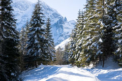 Mountain Tatras forest Royalty Free Stock Images