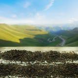 Mountain Tea stock image