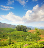 Mountain tea plantation in India Stock Images