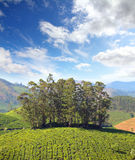 Mountain tea plantation in India Royalty Free Stock Photos