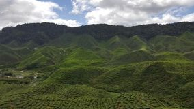 Mountain Tea Plantation. Then make a career at home. And a tourist attraction Stock Photo