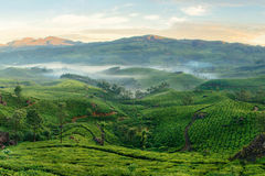 Mountain tea plantations in Munnar. Munnar tea plantations with fog in early morning at sunrise. Kerala, India stock images