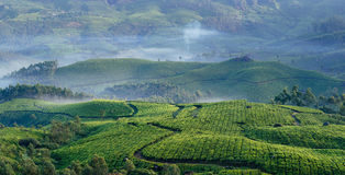 Mountain tea plantations in Munnar Royalty Free Stock Photos
