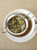 Mountain tea in tea strainer Stock Photo