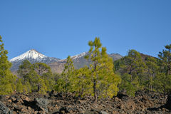 Mountain Teide in Tenerife, Canary Islands, Spain. Stock Photography