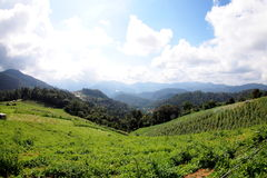 Mountain. Thailand scenic mountain landscape shot at Mount Royalty Free Stock Images