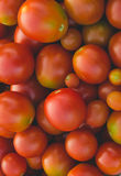 Mountain tomato top view. The mountain red with a green shade tomato the top view Royalty Free Stock Photos
