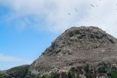 A mountain top with bird sanctuary at Seven Islands Royalty Free Stock Photography