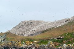 Mountain top with bird sanctuary at Seven Islands Stock Images