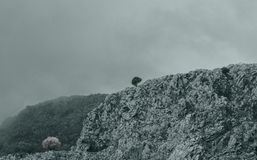 Mountain top in Corfu Greece with dramatic fog and a lone tree.  Stock Photography