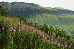 Mountain top flowers royalty free stock photography