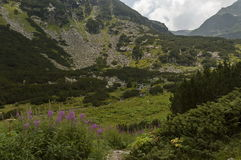 Mountain top overgrown with coniferous forest, glade  and stream on the ecological walk toward   Maliovitza peak in Rila mountain. Mountain top overgrown with Royalty Free Stock Images