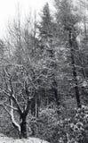 Mountain top Snow Stock Photos
