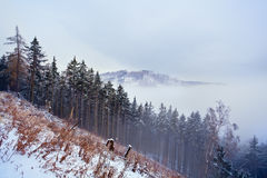 Mountain top in winter Royalty Free Stock Image