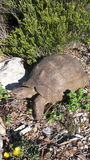 Mountain  tortoise - mobile home Royalty Free Stock Images