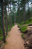 Mountain Track In Summer Jogging Path Stock Photo