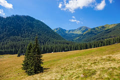 On a mountain trail stock photography