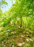 Mountain trail in the forest Royalty Free Stock Images