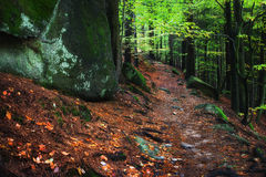 Mountain Trail in the Forest Royalty Free Stock Image