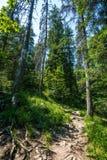 Mountain trail through the forest Stock Photo