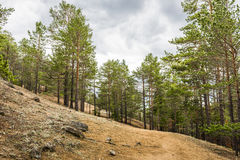 The mountain trail goes through a pine forest Royalty Free Stock Images