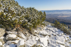 Mountain trail located next to the pine. Royalty Free Stock Images