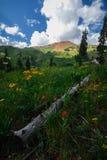 403 Mountain Trail royalty free stock photos