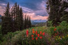 403 Mountain Trail stock photography