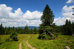 Mountain trail with pines Royalty Free Stock Photography