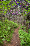 Mountain Trail Rhododendron North Carolina Stock Photos