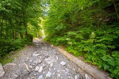Mountain trail with stones Stock Photography