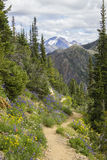 Mountain Trail in Summer