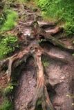 Mountain trail in Table Mountains, Poland Stock Image