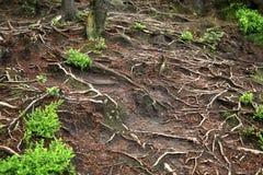 Mountain trail in Table Mountains, Poland Royalty Free Stock Photo