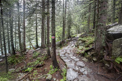 Mountain trail in Tatry, Poland. Stock Image