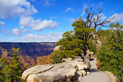 Mountain trail to the top of the North Rim. Grand Canyon Stock Photos