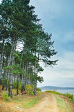 Mountain trail with tree by lake Stock Photo