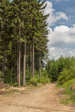 On a mountain trail. The view from a trail Rudawski Landscape Park. Beautiful spruce forests. Country Poland. Region: Lower Silesia Royalty Free Stock Photo