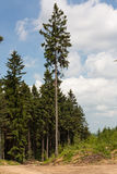 On a mountain trail. The view from a trail Rudawski Landscape Park. Beautiful spruce forests. Country Poland. Region: Lower Silesia Stock Photos