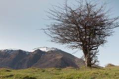 Mountain tree Stock Image