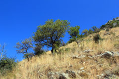Mountain tree Royalty Free Stock Photos