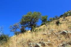 Mountain tree royalty free stock photos