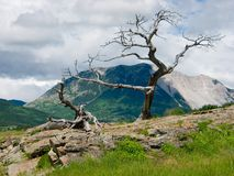 Mountain Tree Stock Images