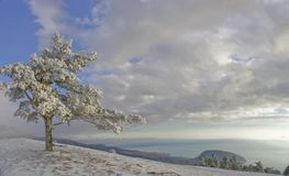 Mountain tree. Pine-tree with snow under blue sky with white clouds in mountains Royalty Free Stock Image