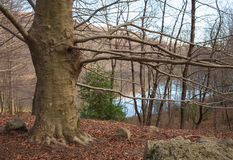 Mountain tree ,autumn and winter lake Royalty Free Stock Images