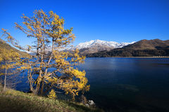 Mountain tree with lake and blue sky Stock Photography